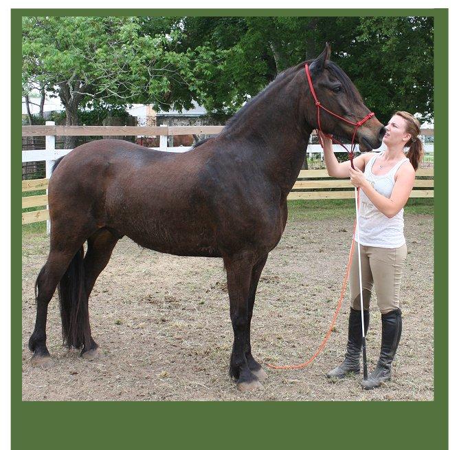 Kristull Ranch Horse Boarding Facilities Austin Texas