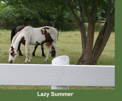 Kristull Ranch Horse Boarding Facilities Austin Texas - Paddocks