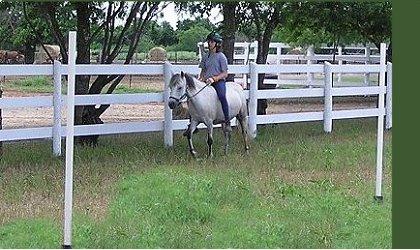 Kristull Ranch Horse Boarding Facilities Austin Texas - HOME